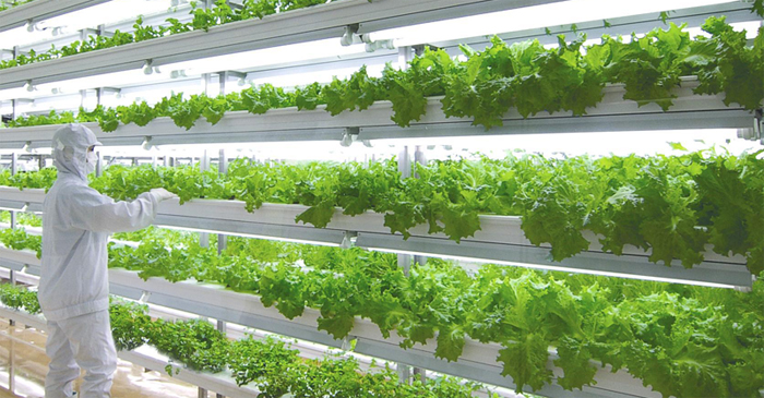 urban hydro farming sustainable solutions to depleting